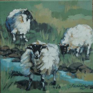 'Black faced sheep'
