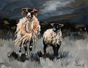 'Black face sheep'