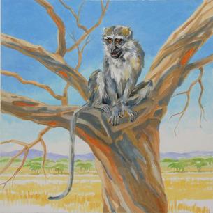 Mamba the Vervet Monkey