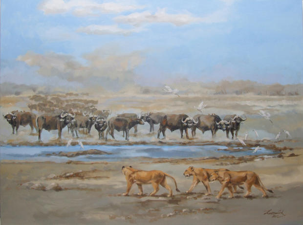 'Buffalo and Lionesses'
