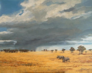 'Rhino in South Africa'