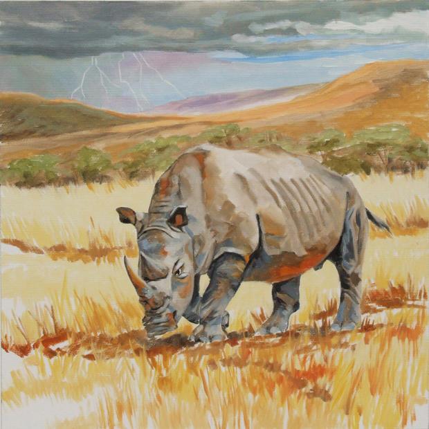 Rutu the Rhino