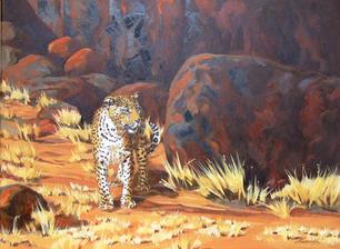 'Leopard Etusis Namibia'