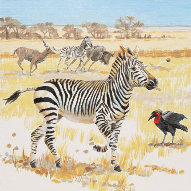Zanti the Zebra