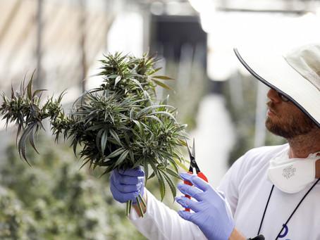 Israel, una ventana hacia el futuro del cannabis medicinal