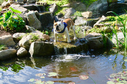 Koi Pond,Water Feature,Boulders,