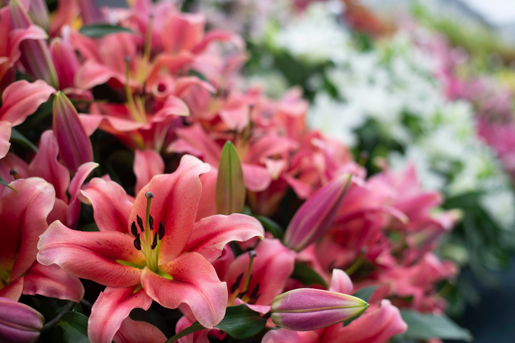 Lily display