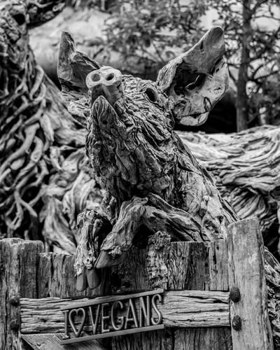Driftwood pig.jpg