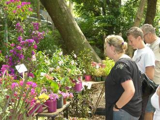 Bellingen Autumn Plant Fair
