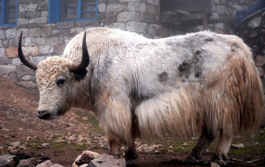Nepal 2007 0205.jpg