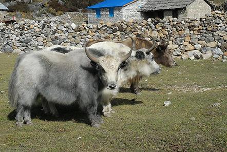 Nepal 2007 0210.jpg