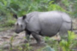 Nepal 2007 0433.jpg