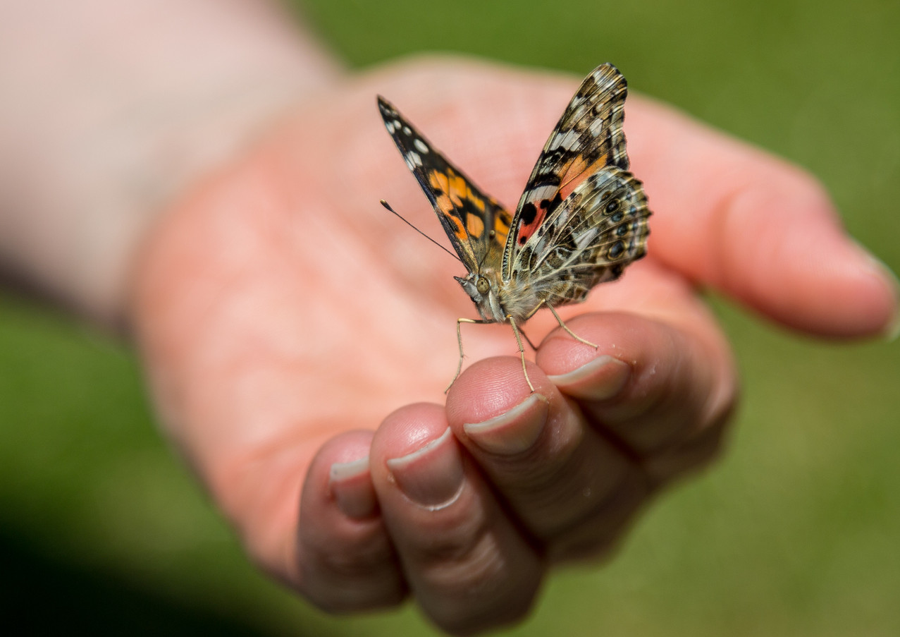 Butterfly in the hand