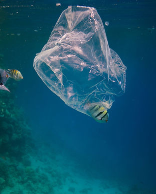 plasticpollution.jpg
