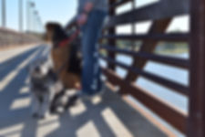 We will walk your dog to dog-friendly areas around Dallas, like White Rock Lake