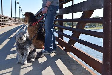 We will walk your dog to dog-friendly areas around Dallas, like White Rock Lake