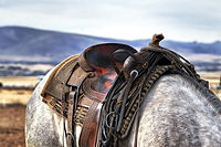 saddle-419745_1920.jpg