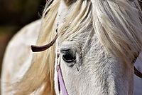 horse-3300651_1280.jpg