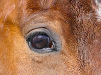 horse-3272755_1280.jpg