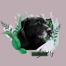 Graphic Design Collage - Personal