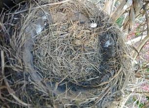 Empty Nest, with a twist