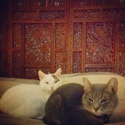 Instagram - Italia & Harrington.  On my pillow no less...jpg