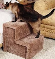 Managing the arthritic cat