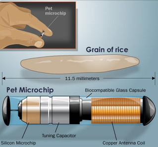 MICROCHIPPING: A valuable asset to the safety of your pet - make sure it's working for you!