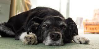 OSTEOARTHRITIS IN DOGS: a recap