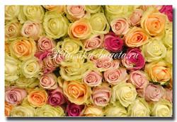 Цветы_39