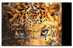 Животные_090