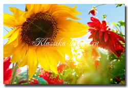 Цветы_44