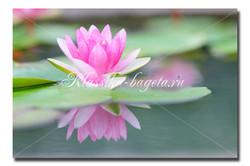Цветы_60