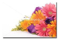 Цветы_100