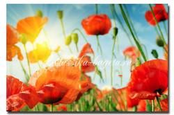 Цветы_62