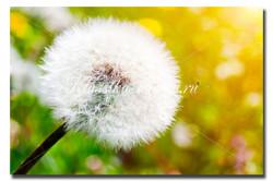 Цветы_107