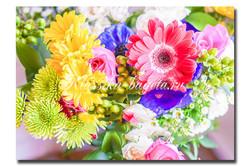 Цветы_112