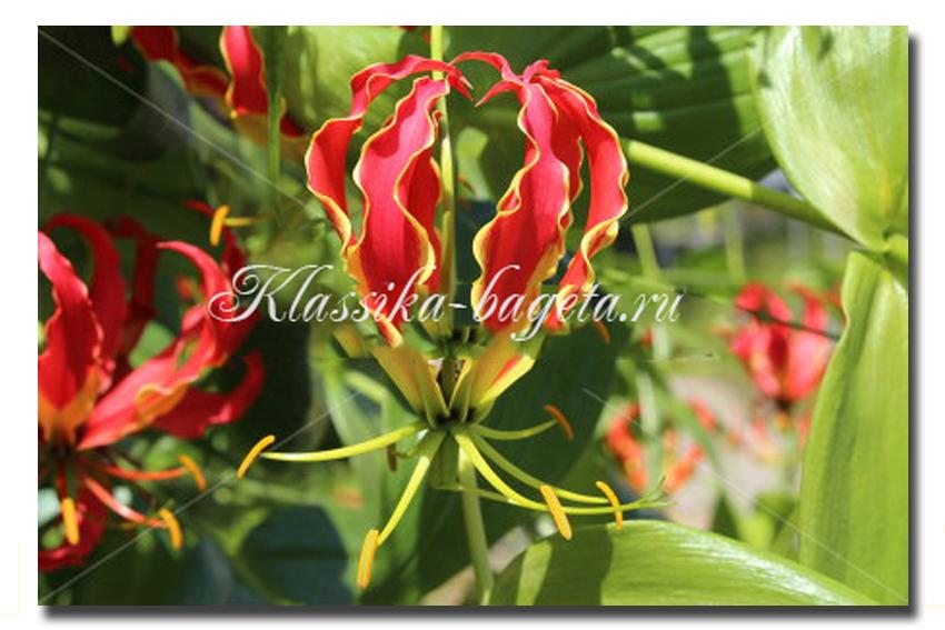 Цветы_64