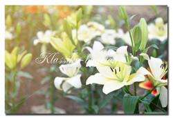 Цветы_12