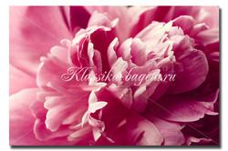 Цветы_96