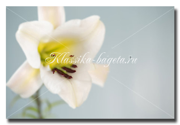 Цветы_41