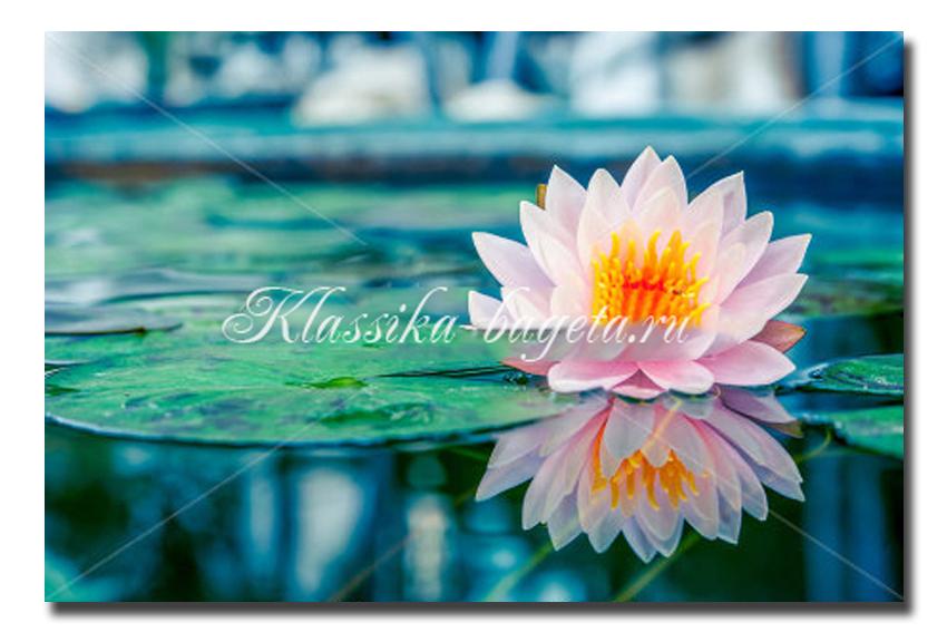 Цветы_95