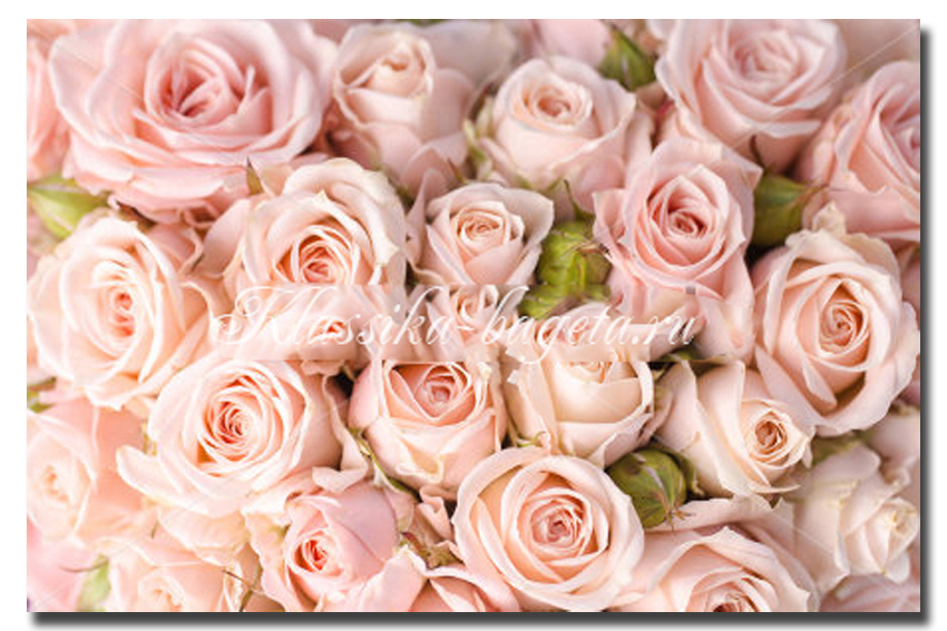 Цветы_103