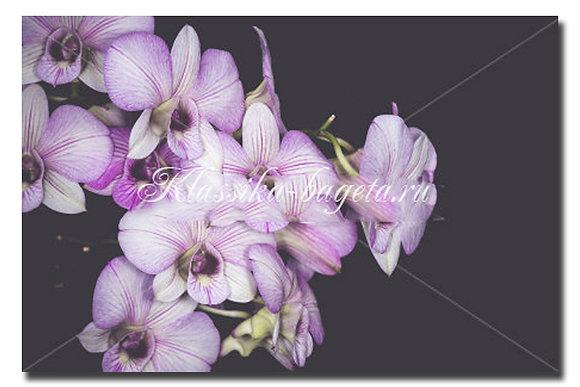 Цветы_89