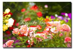 Цветы_65
