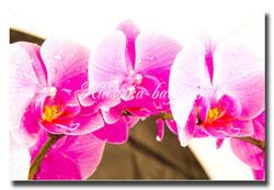 Цветы_40