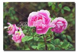 Цветы_116