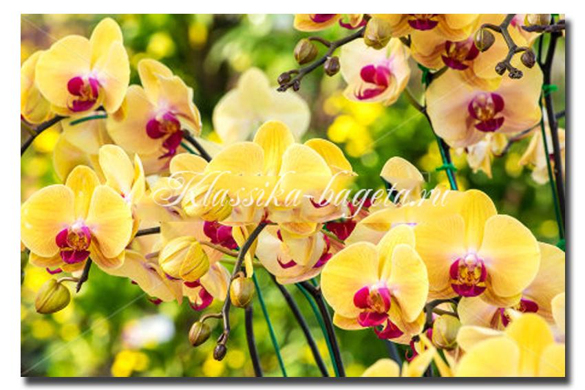 Цветы_99