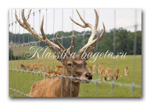 Животные_143