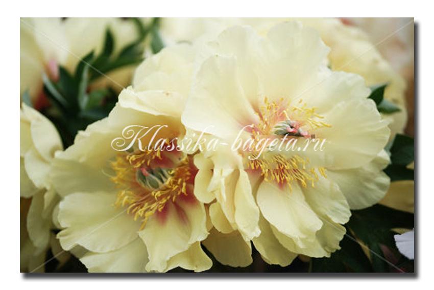 Цветы_61